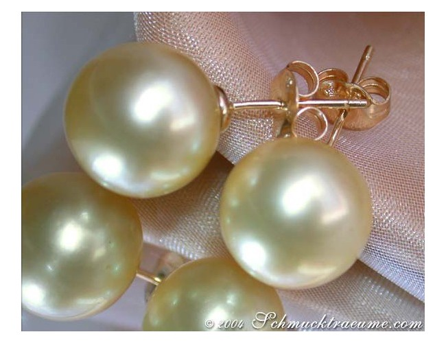 Huge Golden Southsea Pearl Studs