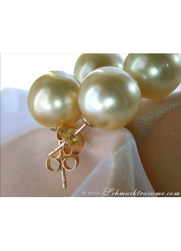 Timeless Golden Southsea Pearl Studs